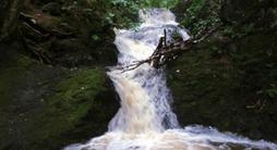 Glenburn Amazon
