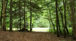 Camp Glenburn Behaviour and Discipline Policies